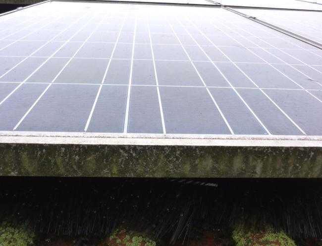 solaranlage schutzb rste photovoltaik schutz tauben marder ratten f r haus und garten. Black Bedroom Furniture Sets. Home Design Ideas